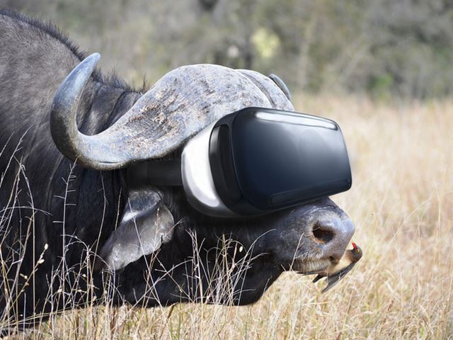 Virtual Safari Tour