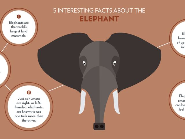 Animal-Infographics_Elephant_2.jpg (2)
