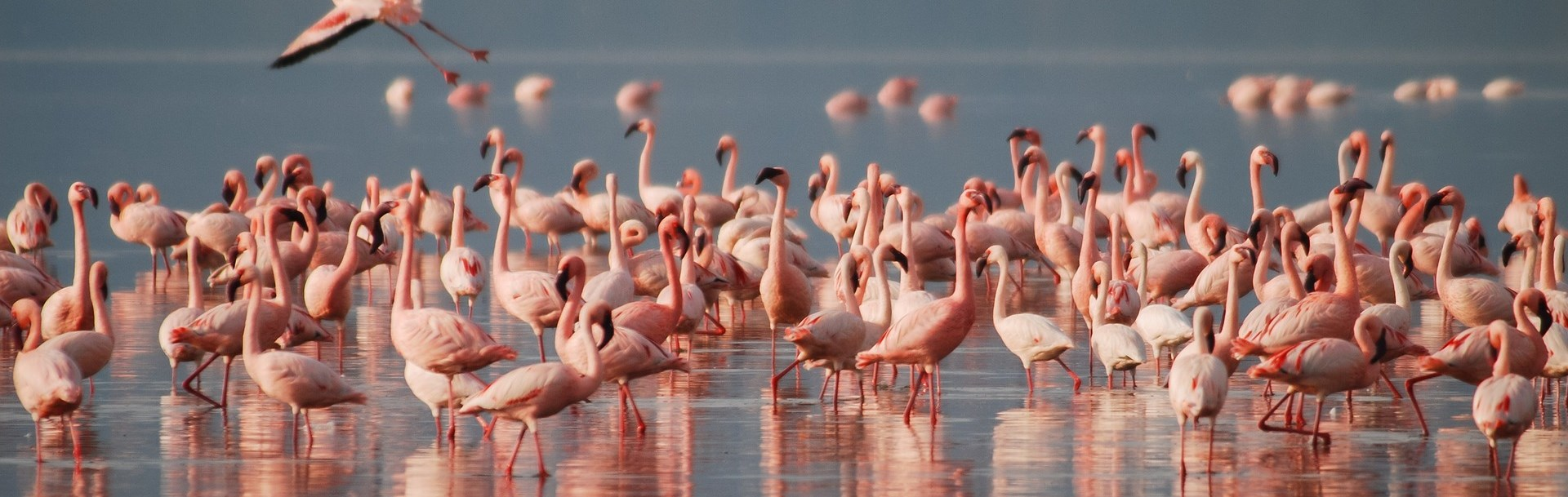 Ngorongoro Highlands to Lake Natron Trek