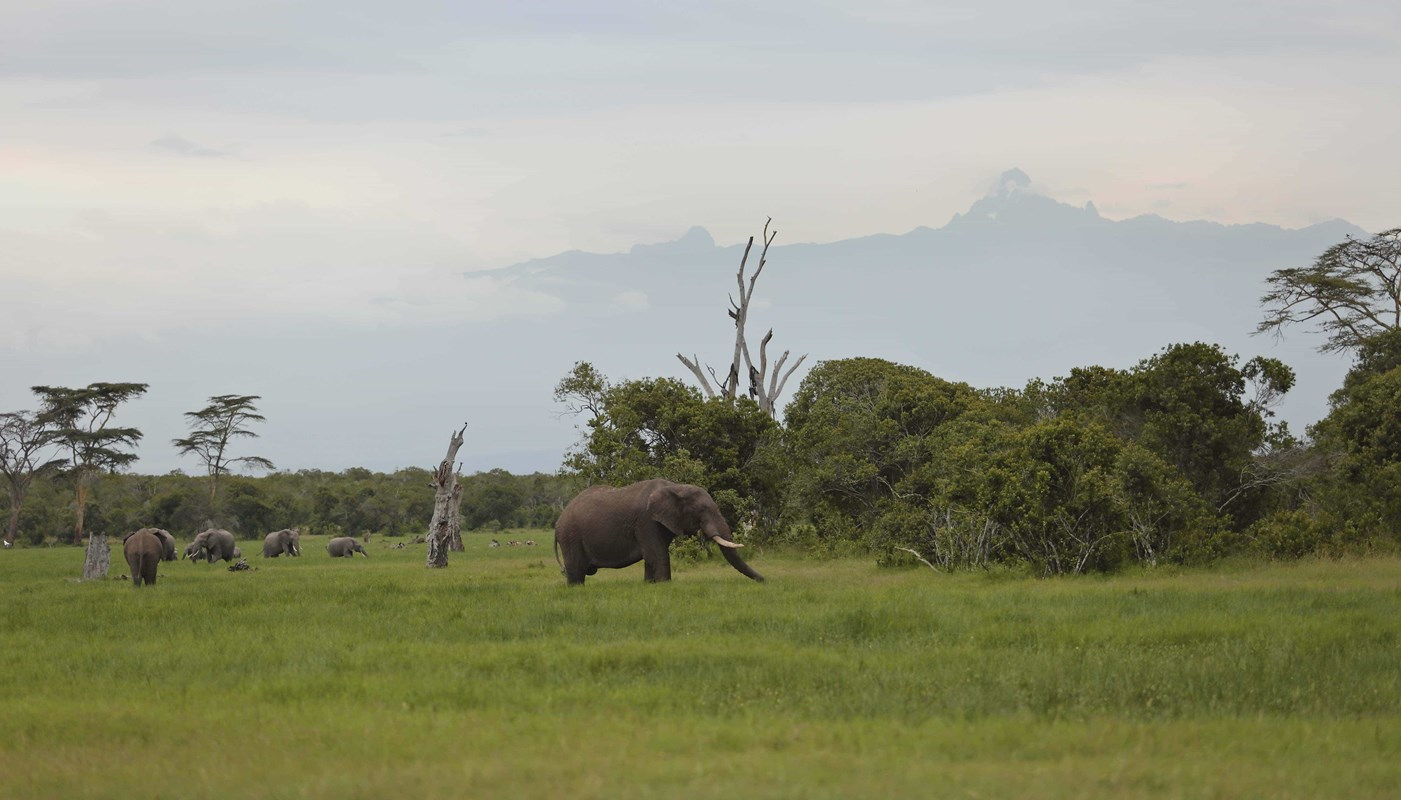 OPBC Landscape And Elephants