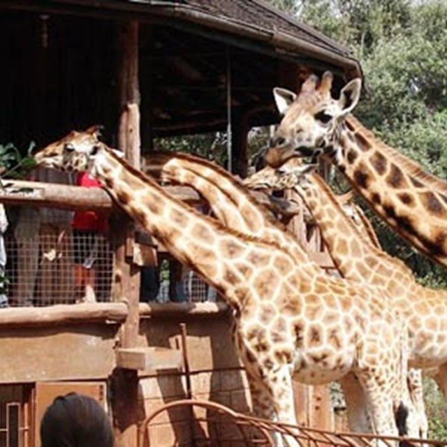 Giraff Center