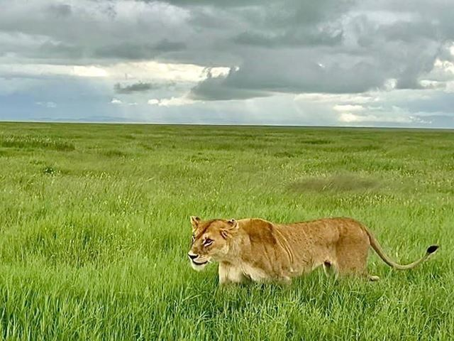 ngorongoro-conservation-area-safari__large.jpg (2)