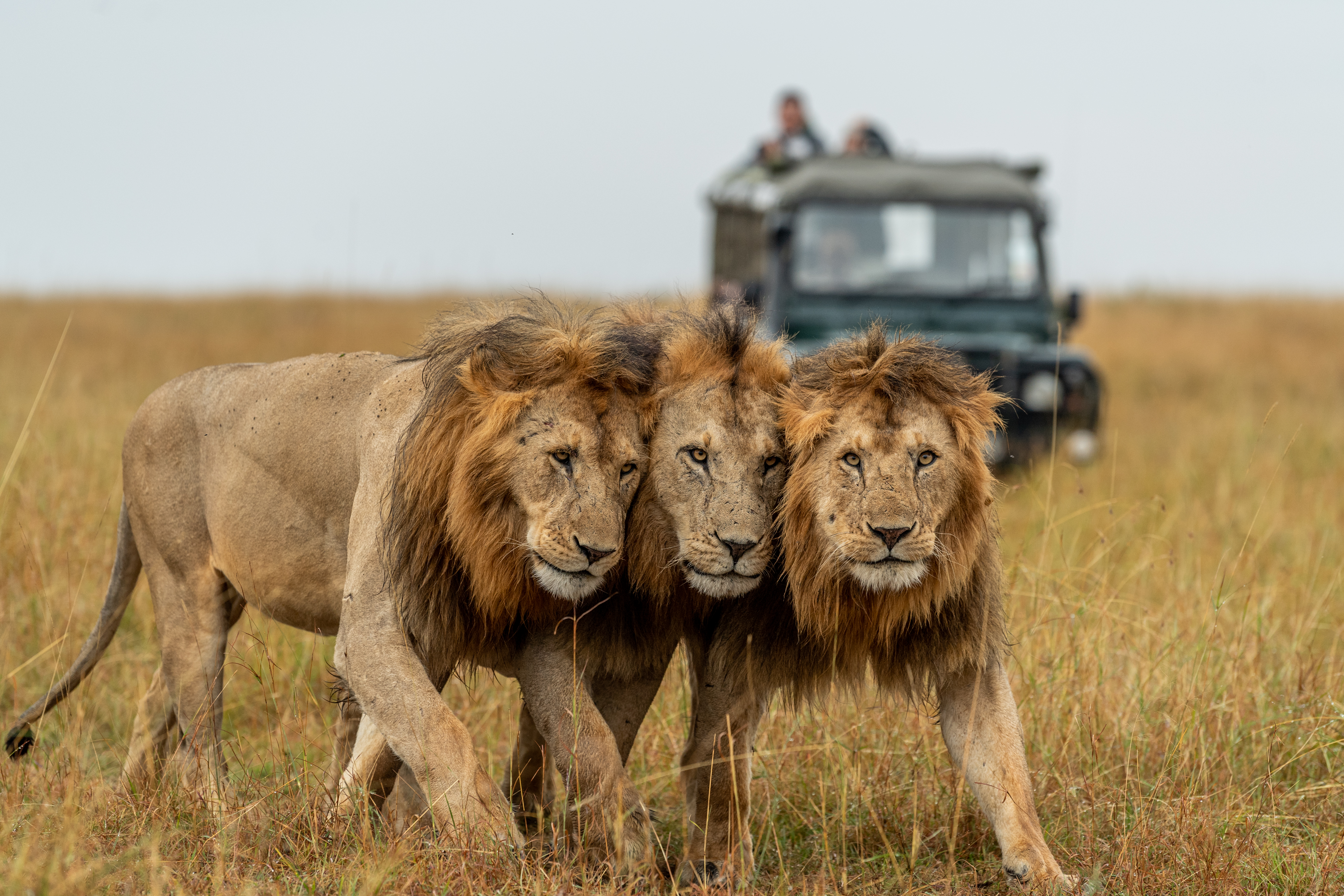 Big 5 Safari | Asilia Africa | Asilia Africa