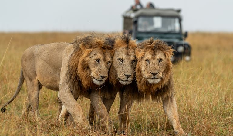 Big Cats, The Big 5 and Iconic African Animals