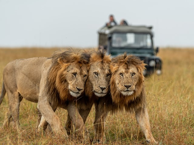 The Big 5, Big Cats and Iconic Africa Animals