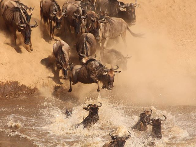 The Ultimate Great Migration Adventure