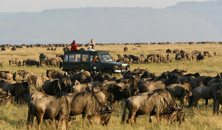 Claim your safari bucket list bonus