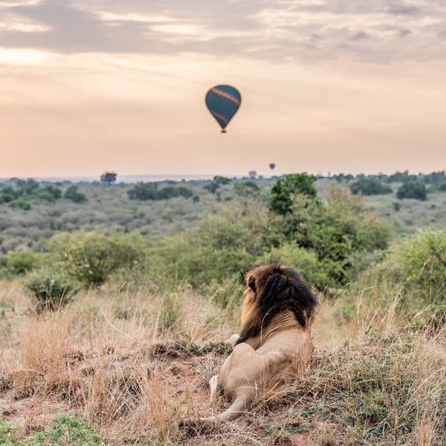 Hot-air balloon safaris