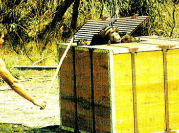 Rubondo: How the Chimpanzees Arrived on Rubondo