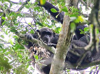 Rubondo Island: Dr. Paco Bertolani – Seeking the Soul of the Ape