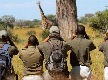Calling all aspiring walking safari guides!