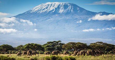 Tanzania Temptations - cover