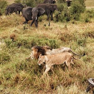 Serengeti - lions and elephants.