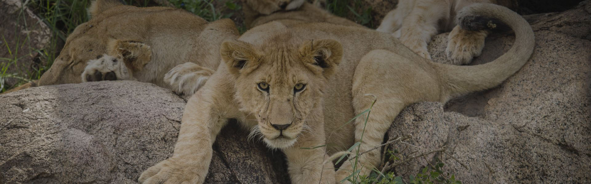 Discover the magic of the Kenyan Region with Asilia Africa