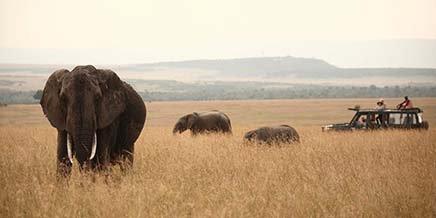 Sayari Camp | Serengeti Safari | Tanzania | Asilia Africa