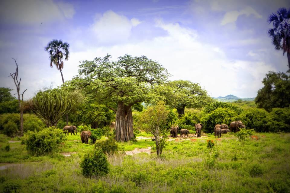 Serengeti National Park >> Ruaha National Park | Tanzania | Asilia Africa
