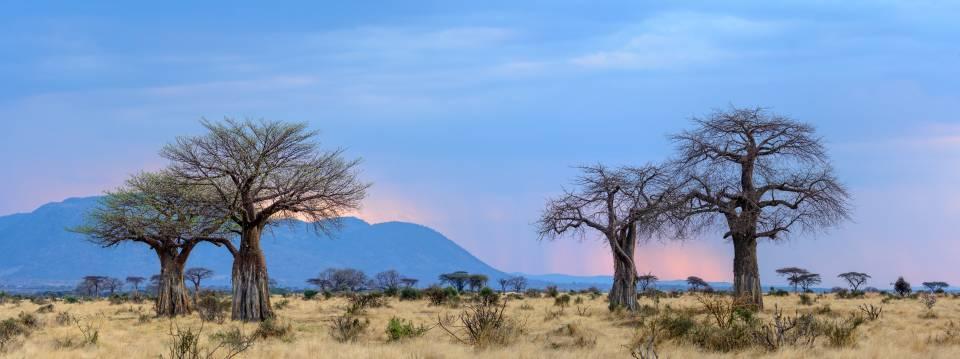 Ruaha National Park Tanzania Asilia Africa