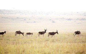 Ubuntu-Location - Ubuntu-camp-hartebeest