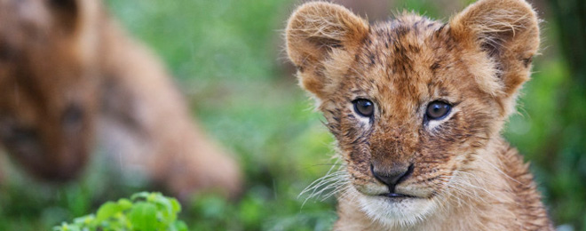 planning your trip wildlife conservation tags lion movies