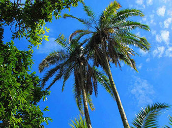 Rubondo Island: Off the beaten track