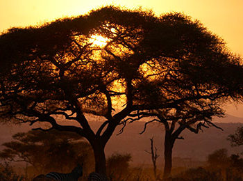 13 Reasons to visit the Tarangire National Park