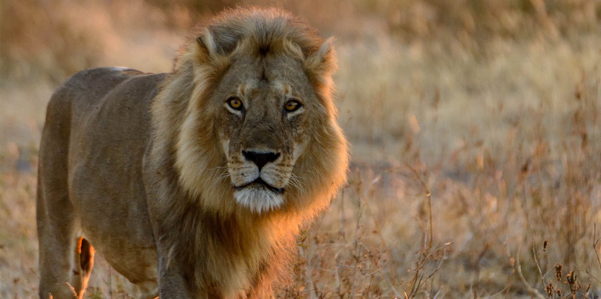 Find out more about a Big Cats Experience with Asilia Africa