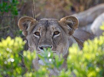 East African Tales: Top 9 Wildlife Documentaries To Watch