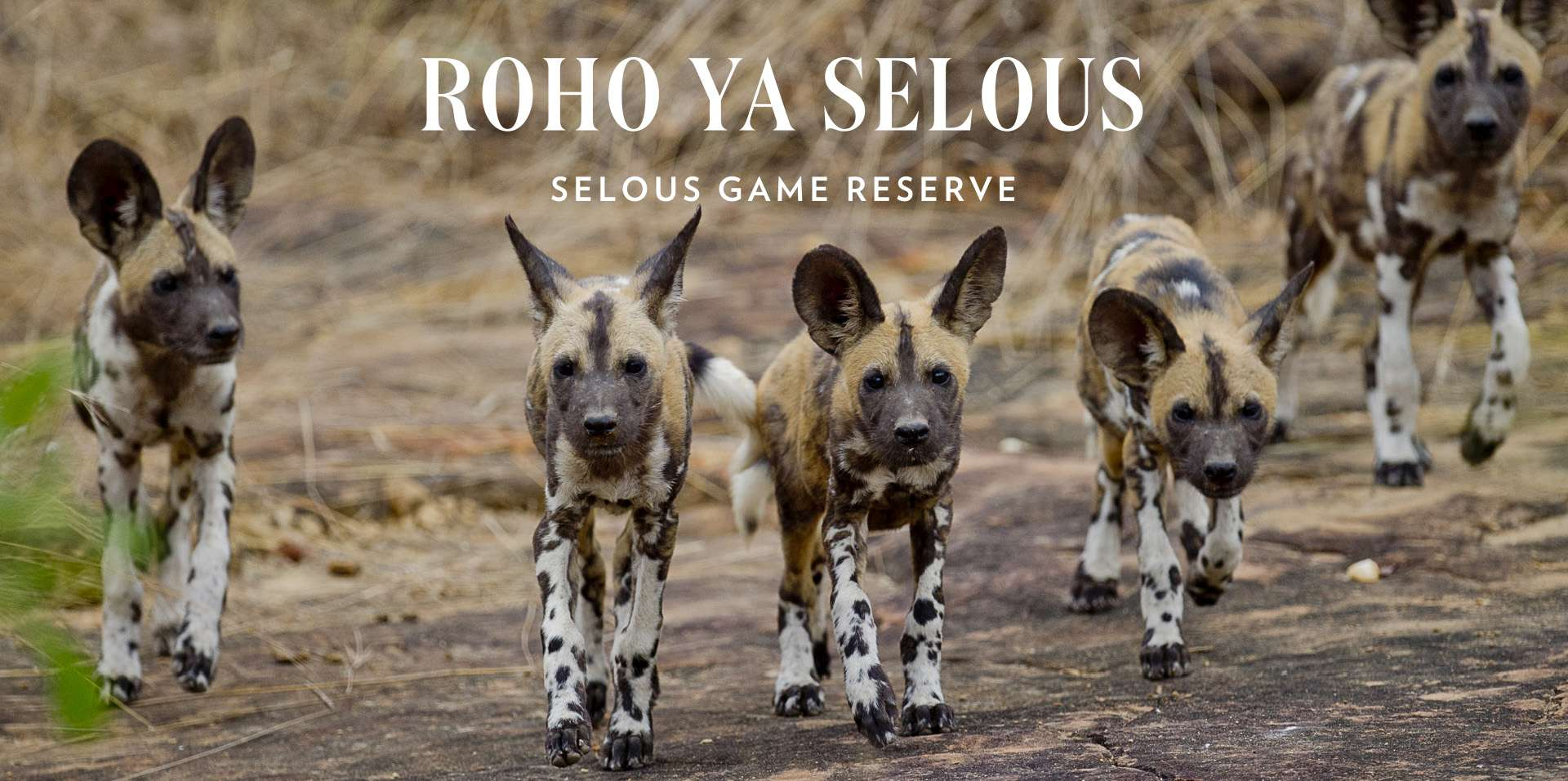 Come and join us in the heart of Selous at Roho ya Selous