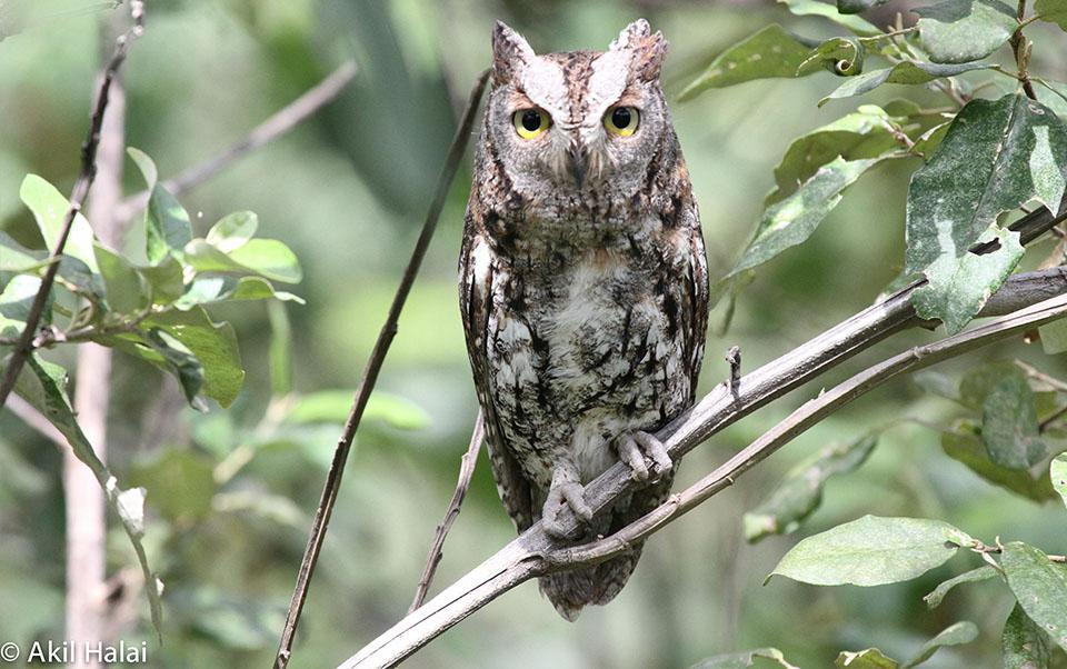 Birds of Tarangire National Park.