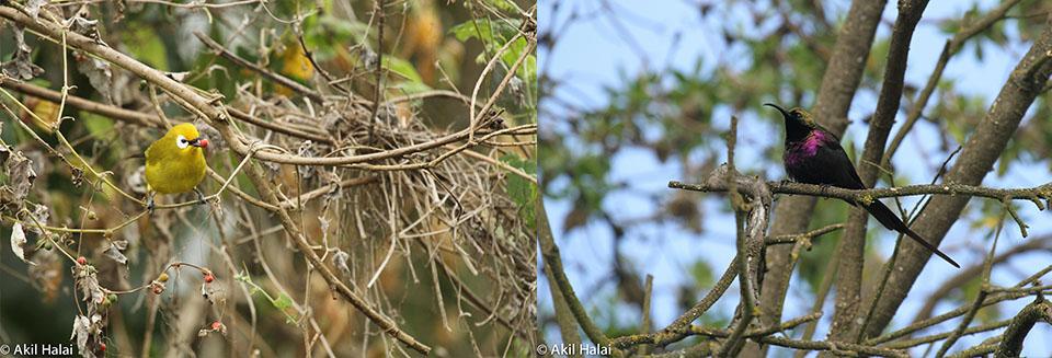 Birds of the Ngorongoro Conservation Area.