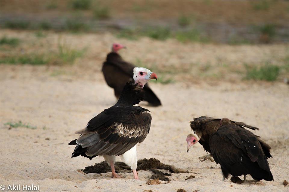 Birds of Ruaha National Park.