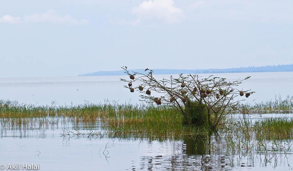Birds of Rubondo Island.