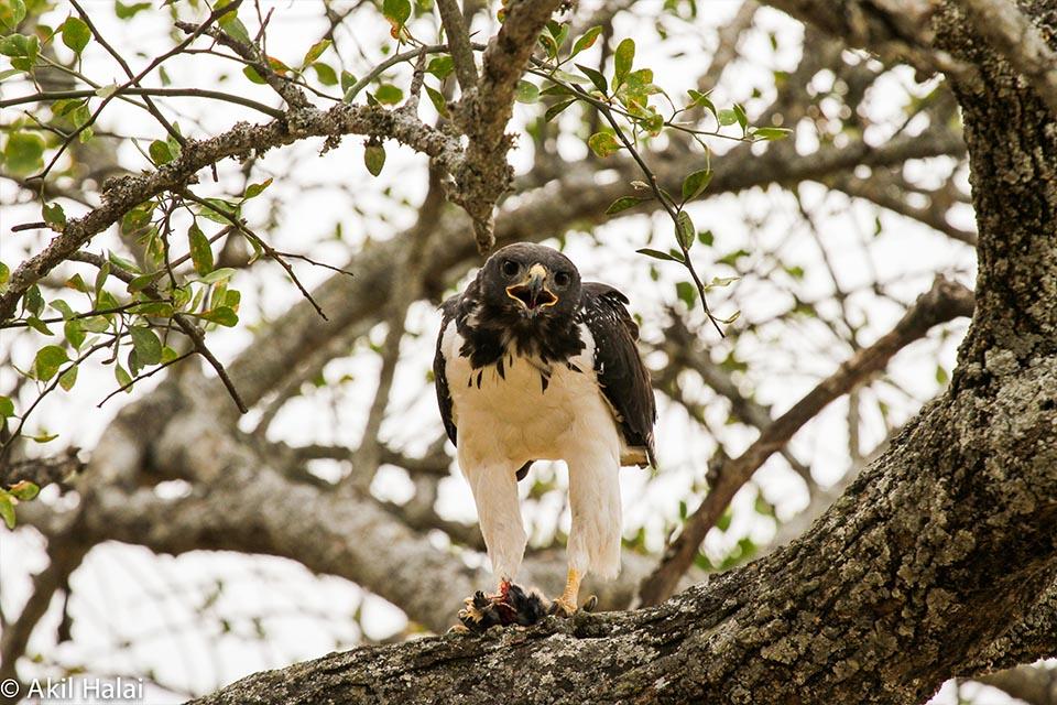 Birds of the Serengeti.