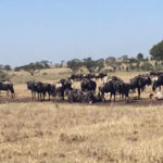 Great Migration Live Update – 19 February 2018