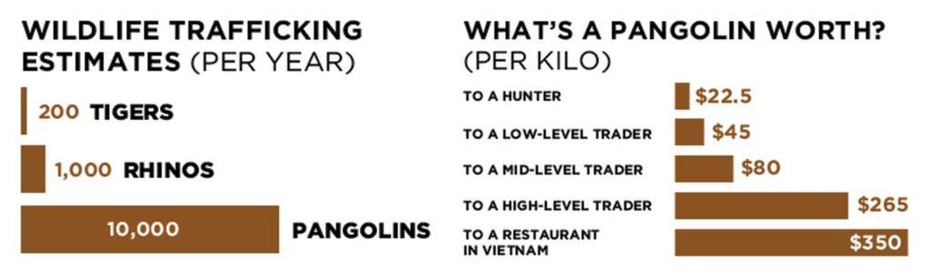 Pangolin poaching statistics. Credits to CNN.