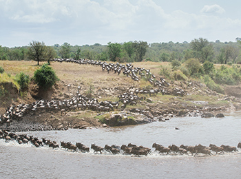 Great-Migration-river-crossing-mara-river-serengeti