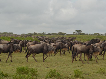 a group of the migration close to the emala camps