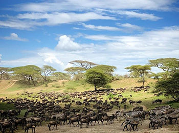 Great Migration Live Update – 07 January 2019