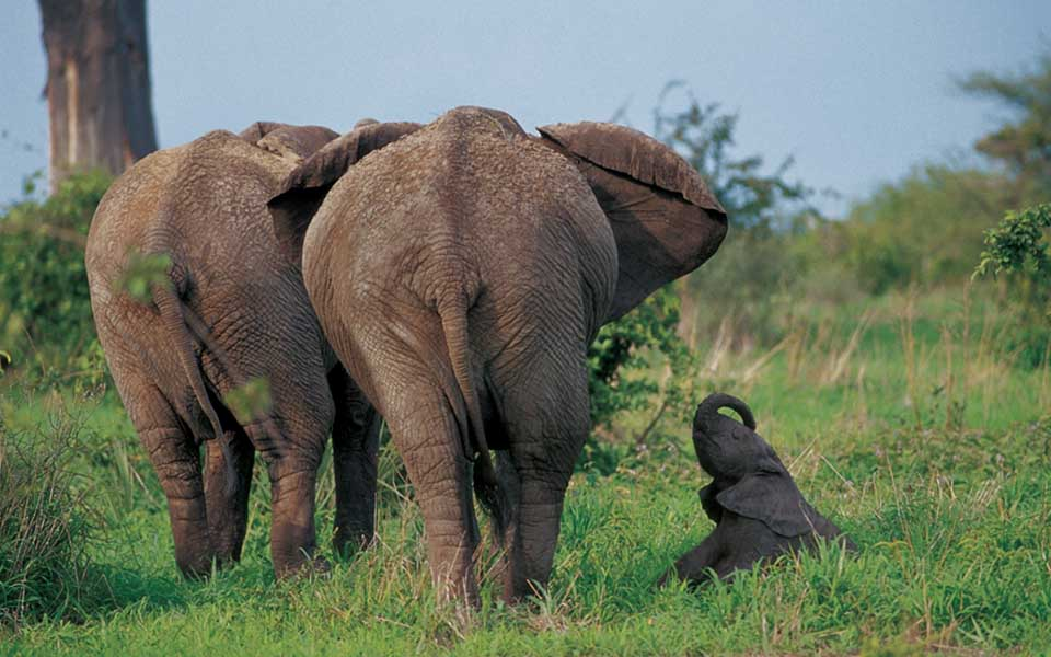 Elephant family in the bush