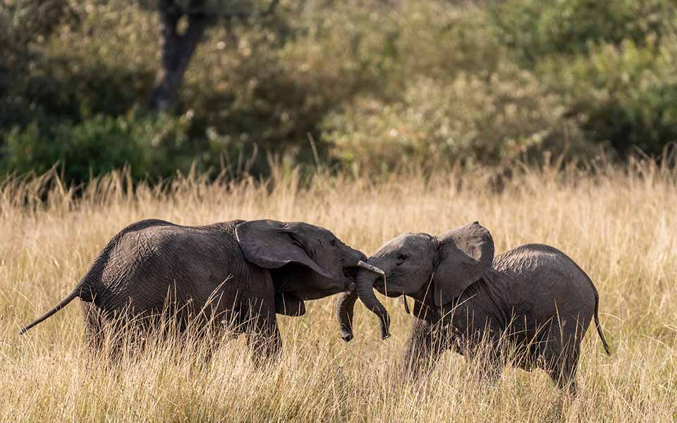 baby elephants in the masai mara
