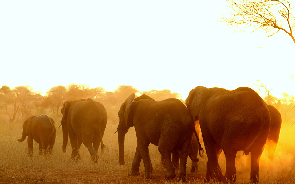 Elephant herd at sunset in Tarangire National Park