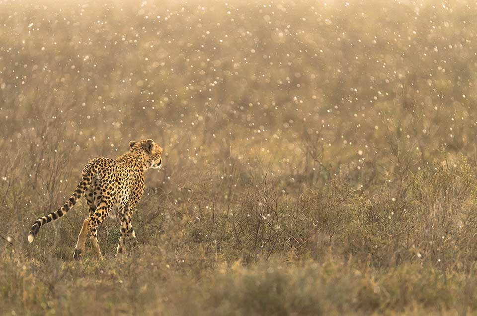 Namiri Plains | Serengeti Safari | Tanzania | Asilia Africa