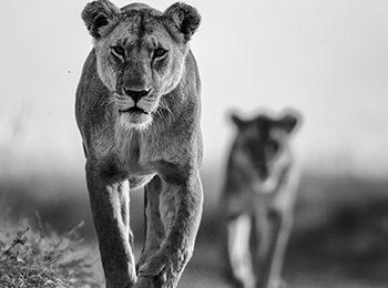 Namiri Plains: East Africa's Big Cat Territory