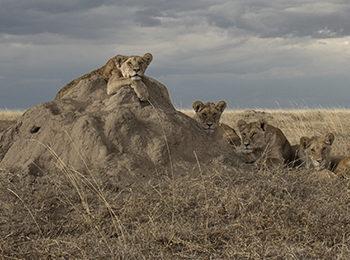 The Plains Of Namiri: East African Grasslands