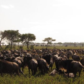 Great Migration Live Update – 25 March 2019
