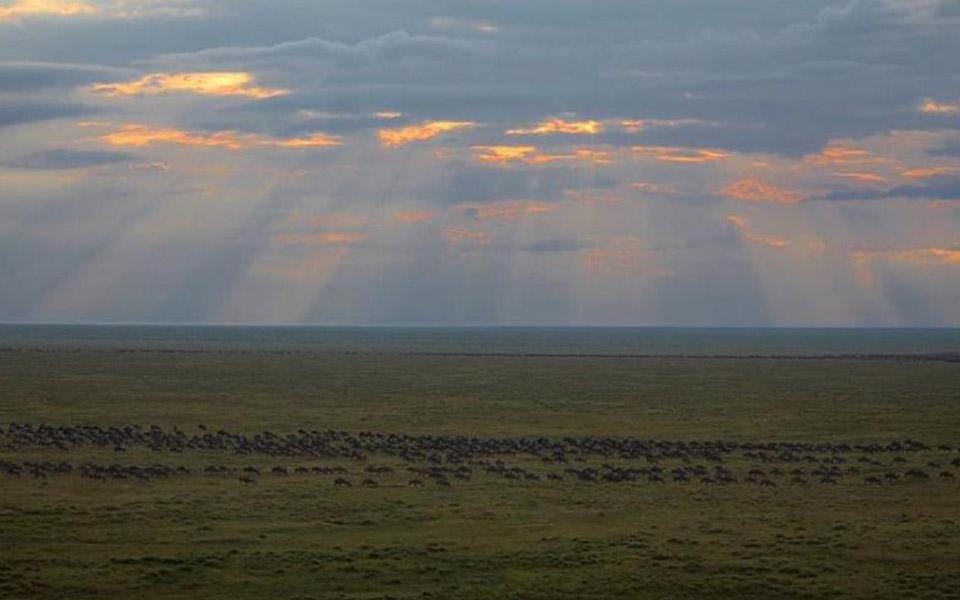 wildebeest migration durin