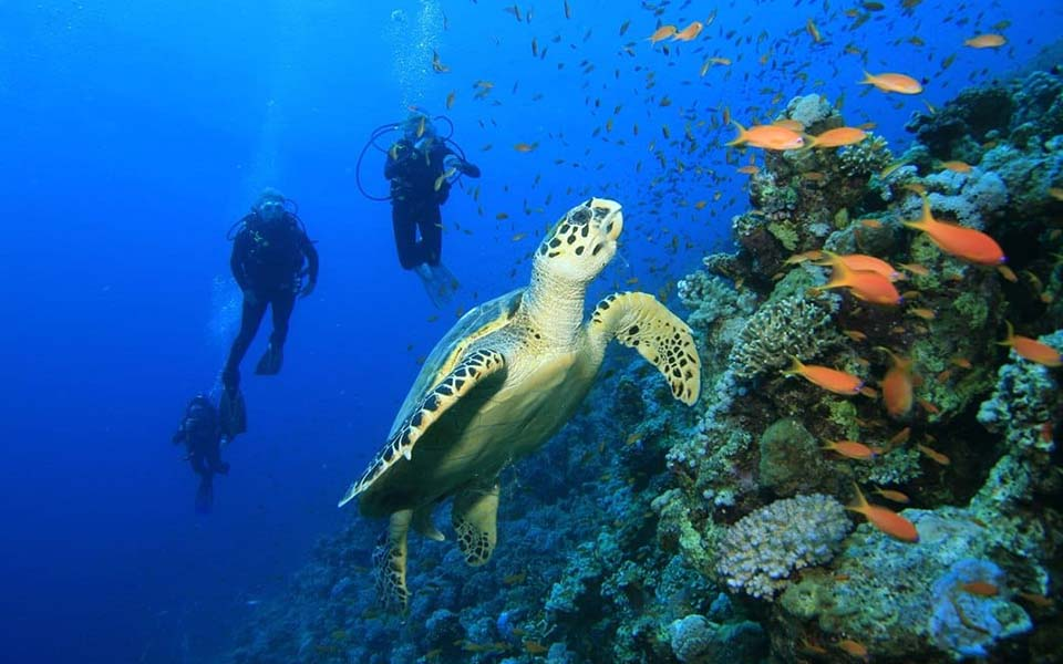 diving with green sea turtle in pemba
