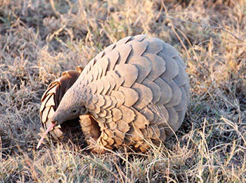 The Ultimate Safari Wildlife Checklist: Top 5 Must See Animals On Safari