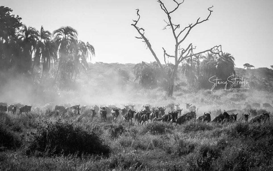 great-migration-in-april-tanzania-africa