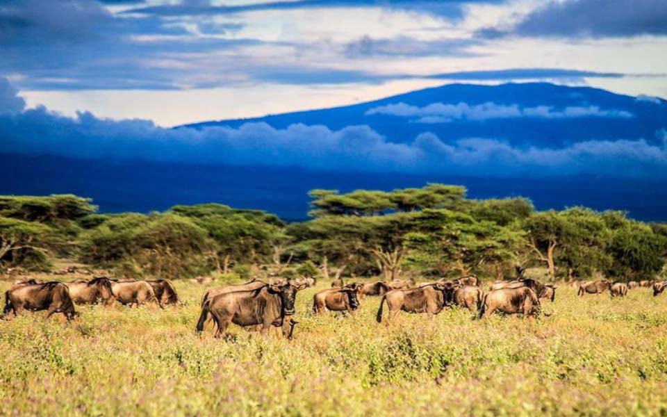 ndutu-safari-lodge-grazing-wildebeest-mountain-trees-background